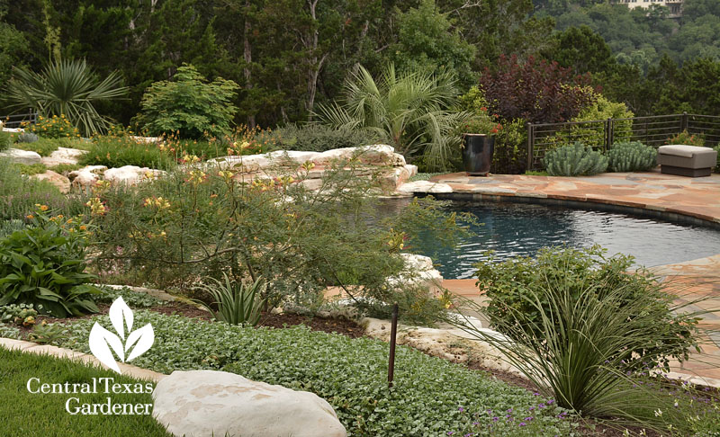 poolside gorgeous garden Central Texas Gardener