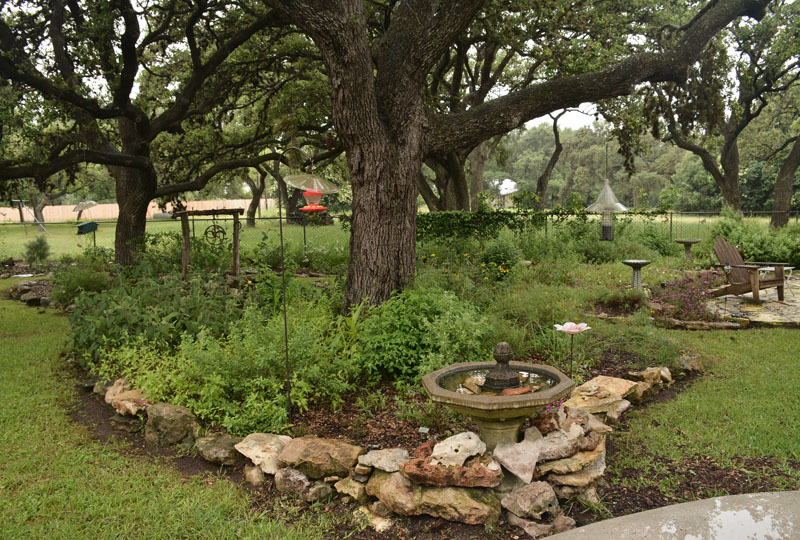 native habitat backyard Central Texas Gardener