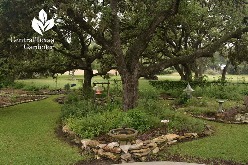 native plant habitat backyard Central Texas Gardener