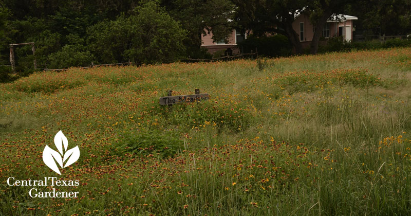 wildflower pocket prairie Central Texas Gardener