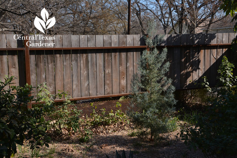 cedar fence with metal screening Central Texas Gardener