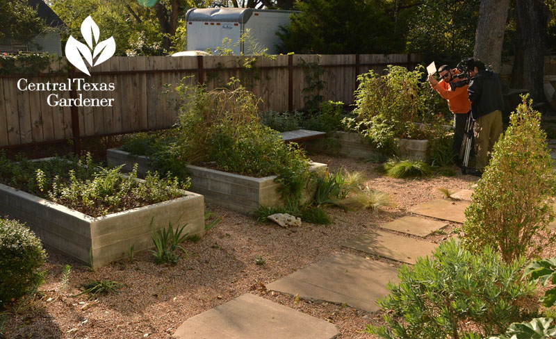 concrete raised beds pathway Central Texas Gardener