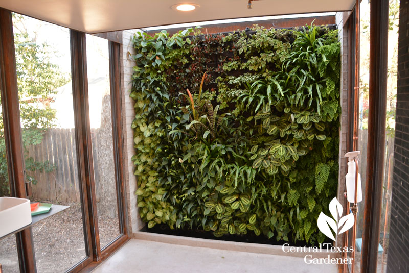 living wall in shower room Central Texas Gardener