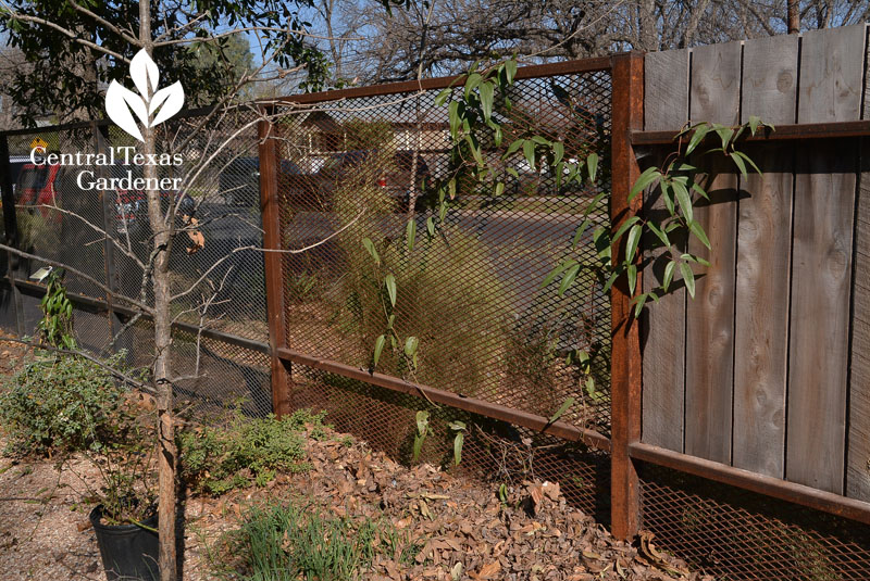 open metal mesh fence Central Texas Gardener