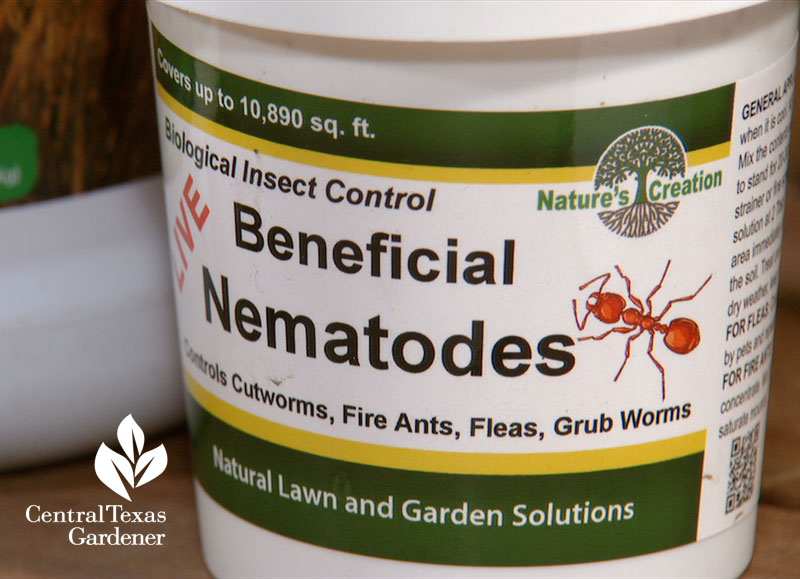 beneficial nematodes fire ant control Central Texas Gardener