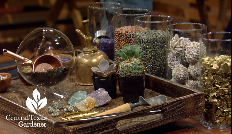 cute terrarium supplies Central Texas Gardener