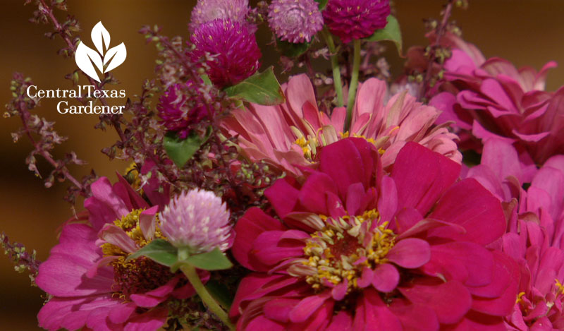 Zinnias and gomphrena flower arrangement Central Texas Gardener