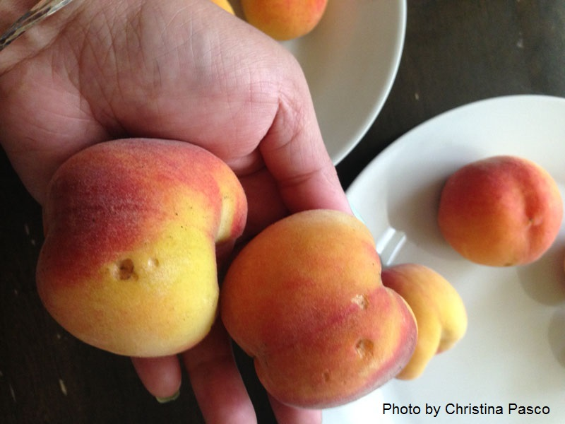 animal damage to peaches Central Texas Gardener