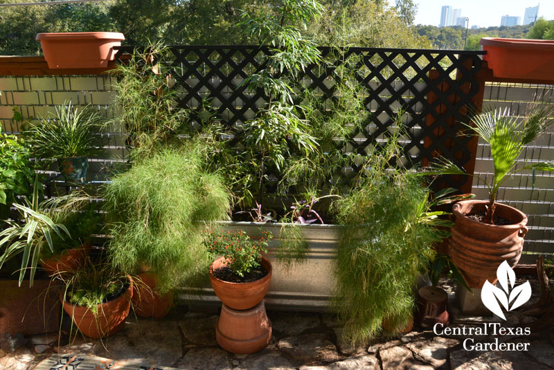 apartment garden design stock tank Central Texas Gardener