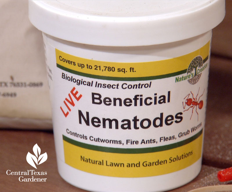 beneficial nematodes grub worm control Central Texas Gardener