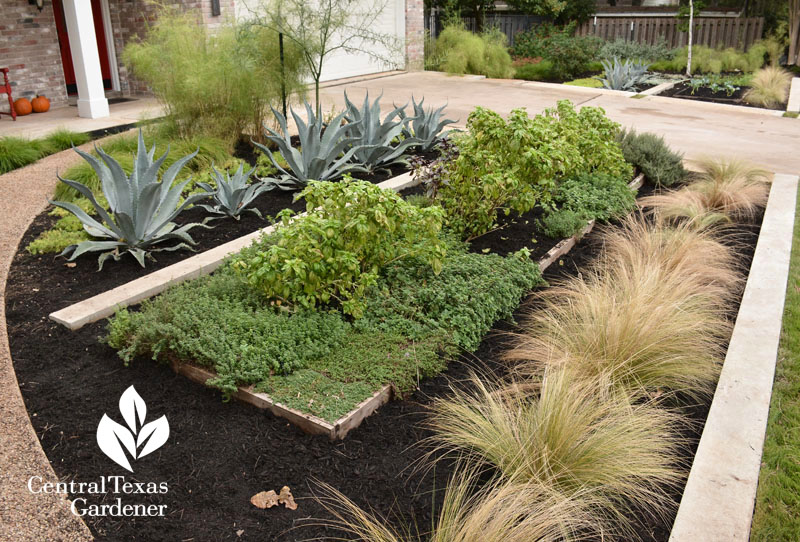 contemporary reduced lawn front garden with food and native plants Central Texas Gardener