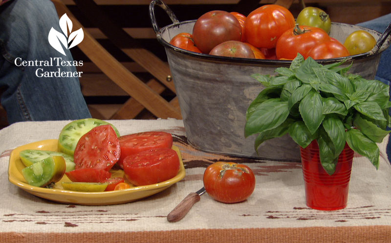 heirloom tomatoes Bill Adams Central Texas Gardener