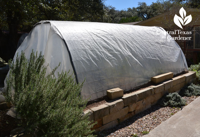 limestone raised beds cattle panel winter cover Central Texas Gardener