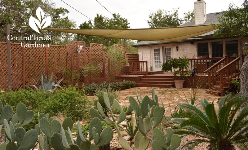 trellis fence screen shade sail patio cover Central Texas Gardener
