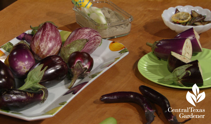 Eggplants and recipes Central Texas Gardener