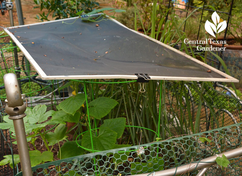 old screen window to shade vegetables Central Texas Gardener