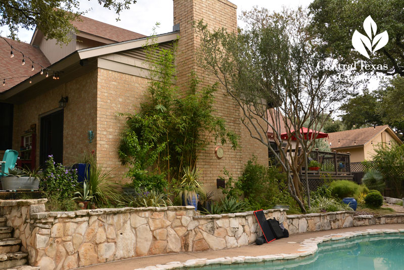 raised limestone bed Texas persimmon plant diversity Central Texas Gardener