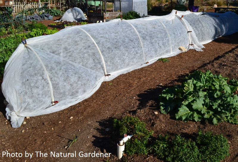 row cover over crops The Natural Gardener Central Texas Gardener