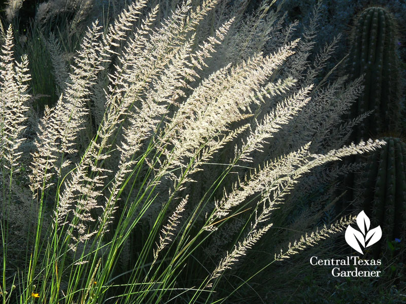 native plants, grasses