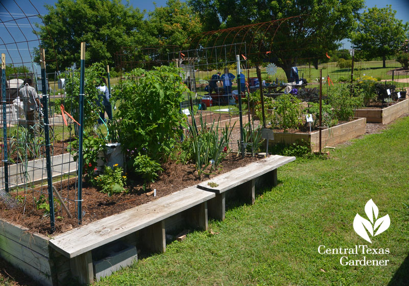raised vegetable beds with seating Central Texas Gardener