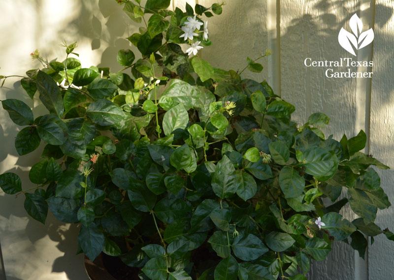plants freezing in their tracks  tips on warm  u0026 comfy