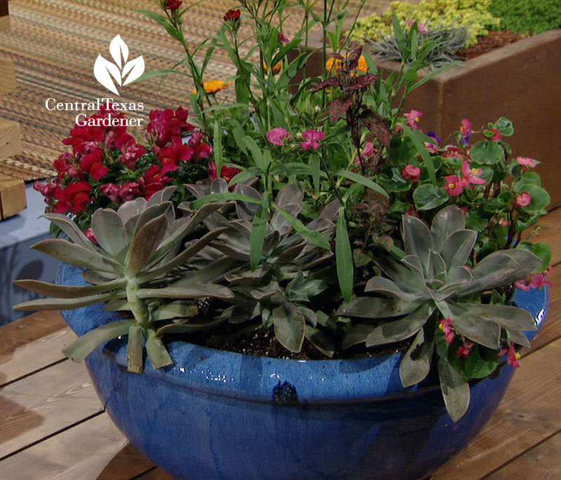 garden pot transition between seasons Central Texas Gardener