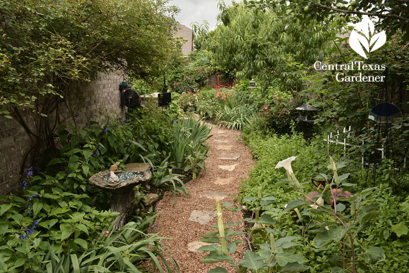 side garden path Central Texas Gardener