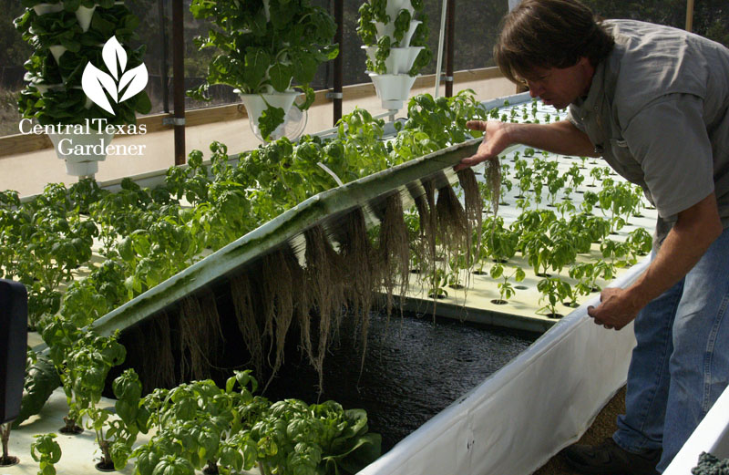 Rob Nash Austin Aquaponics