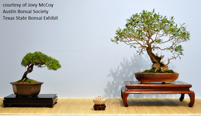 Austin Bonsai Society show and sale Central Texas Gardener