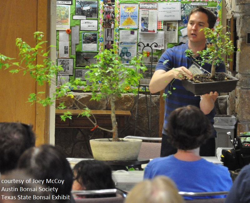 Austin Bonsai Society workshops Central Texas Gardener