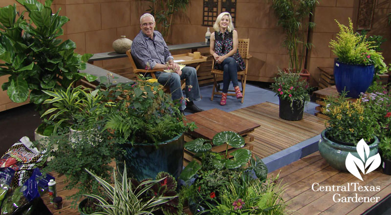 Liz Morphis and Tom Spencer hot weather color Central Texas Gardener