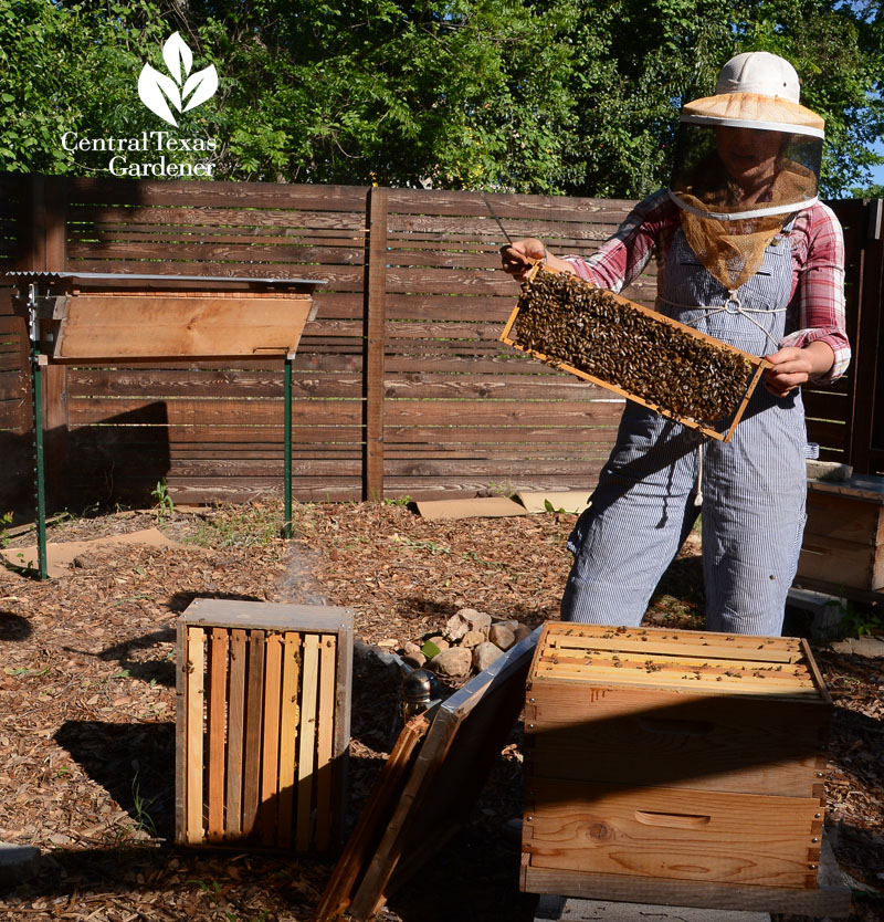 Tara Chapman Two Hives Honey Central Texas Gardener