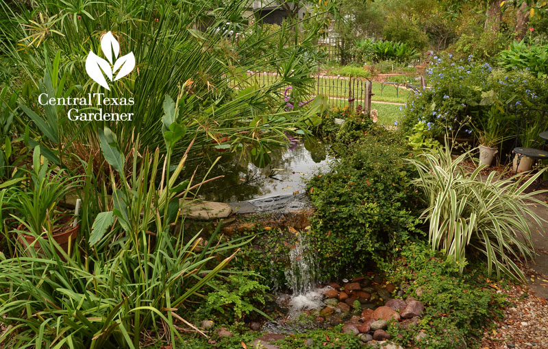 front yard pond and waterfall Central Texas Gardener