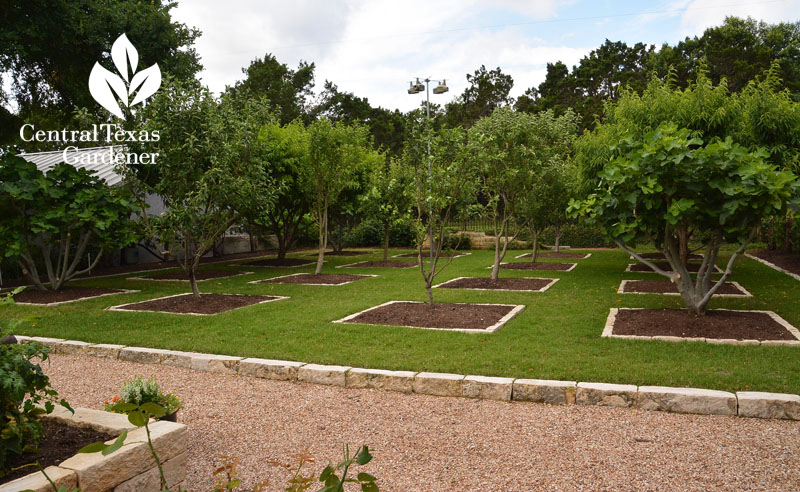 pea gravel parterre to backyard orchard Central Texas Gardener