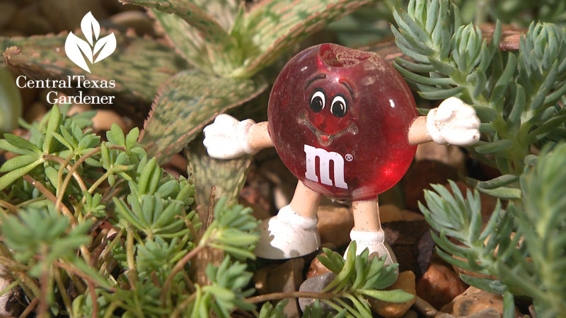 M&M figurine fairy garden container Barbara Wise Trisha Shirey Central Texas Gardener