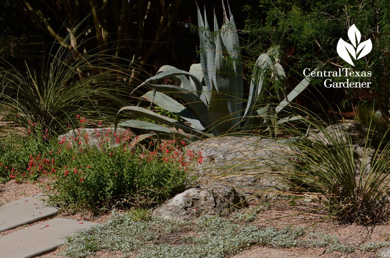 texas rock patio designs, texas rock garden landscape, texas rock home designs, texas landscape pool design ideas, texas native plant garden designs, on texas rock garden designs