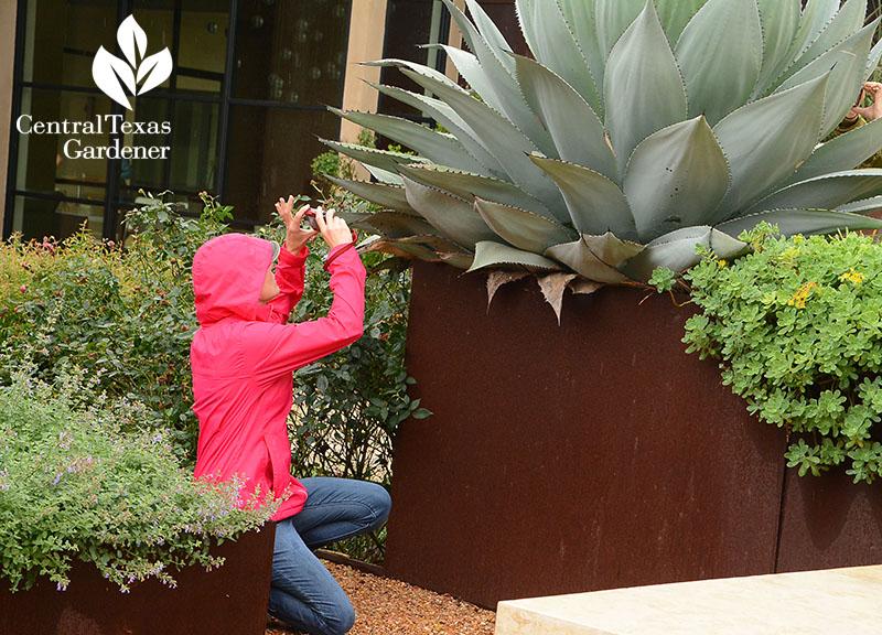 Garden Design Central Texas Gardener