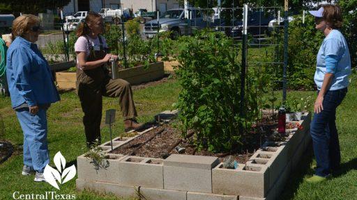 cinder-block-raised-vegetable-beds-Central-Texas-Gardener