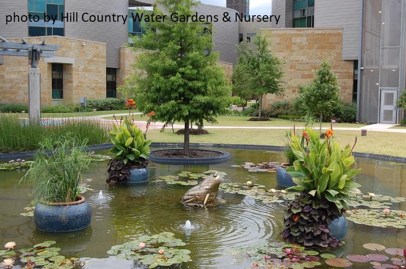 Living it Up Pond & Patio Design | Central Texas Gardener