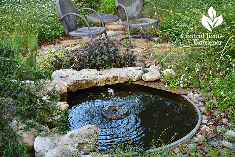 Seeding Food, Flowers and Renovation   Central Texas Gardener
