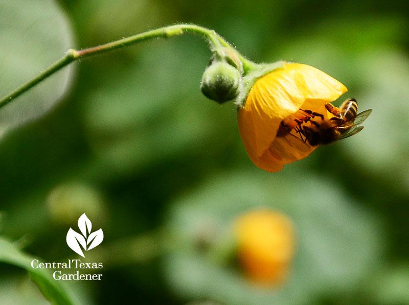 October 2018 Central Texas Gardener
