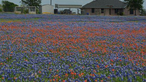 wildflower prairie Kasie and Andrew Brazell