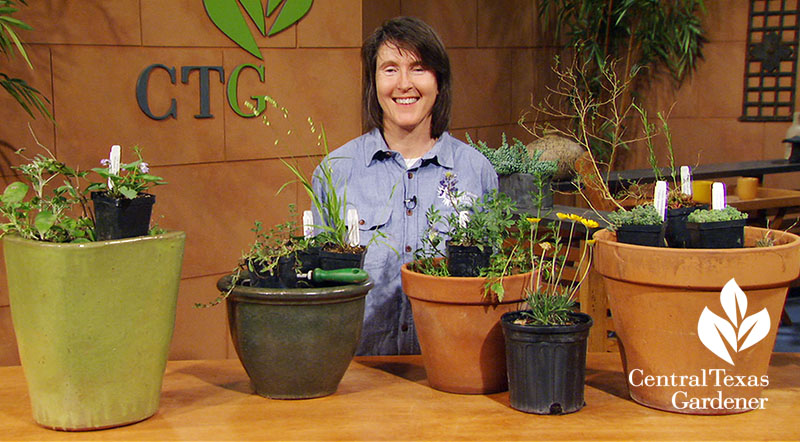 Native container plants Leslie Uppinghouse Central Texas Gardener