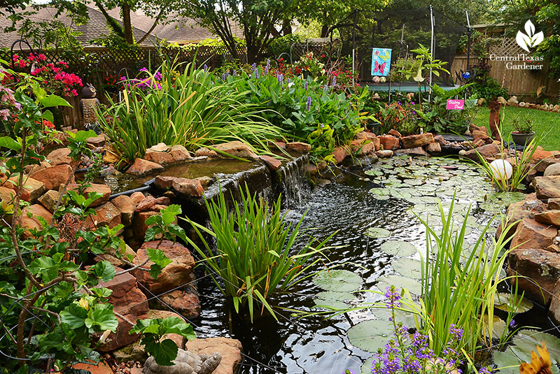 romantic stone lined pond Robert Jennings gardener in Cedar Park backyard Hill Country Water Garden design Central Texas Gardener