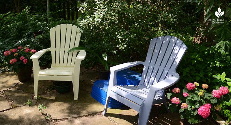 Hydrangea Endless Summer shady patio