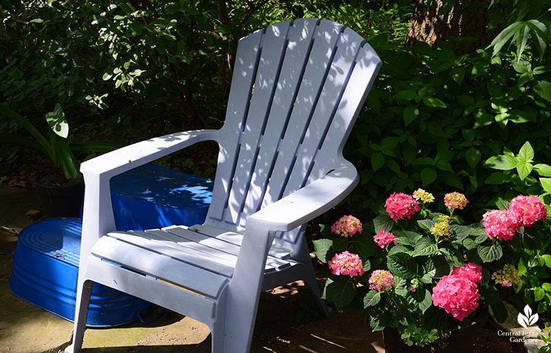 Hydrangea Summer Crush Endless Summer hydrangeas shady patio