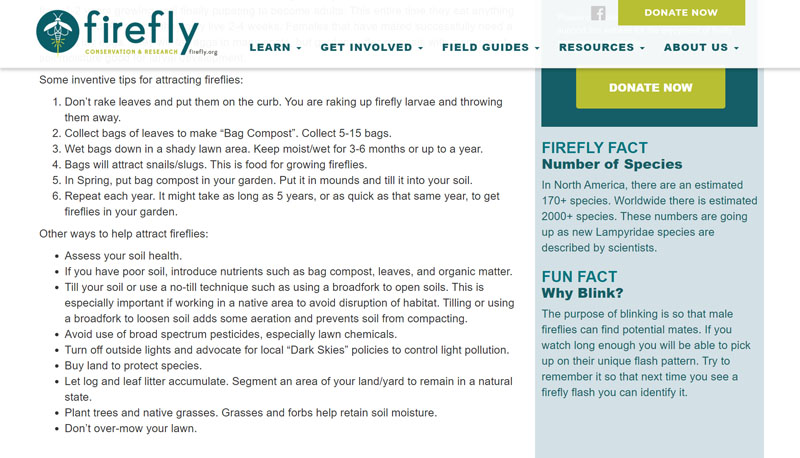 Firefly Conservation and Research habitat tips Central Texas Gardener