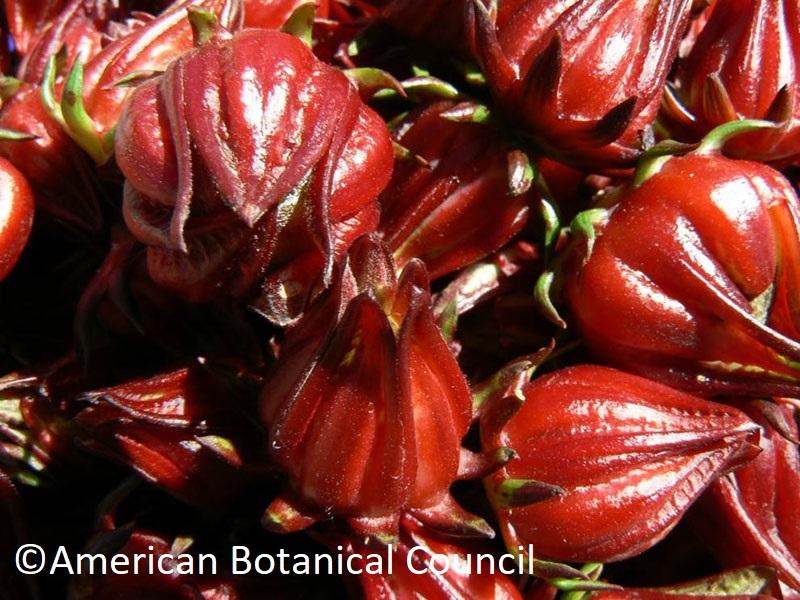 Hibiscus sabdariffa calyces American Botanical Council Central Texas Gardener