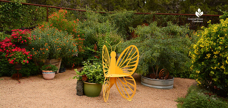 butterfly chair, butterfly vine pentas tropical milkweed fence Doug Green habitat Central Texas Gardener