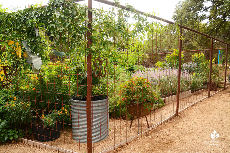containers and perennial plants deer proof fenced butterfly habitat Doug Green Central Texas Gardener